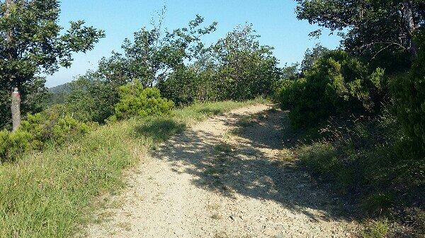 Quasi 6km di corsa nei boschi