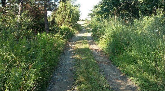 7,0 chilometri…metà salita e metà discesa